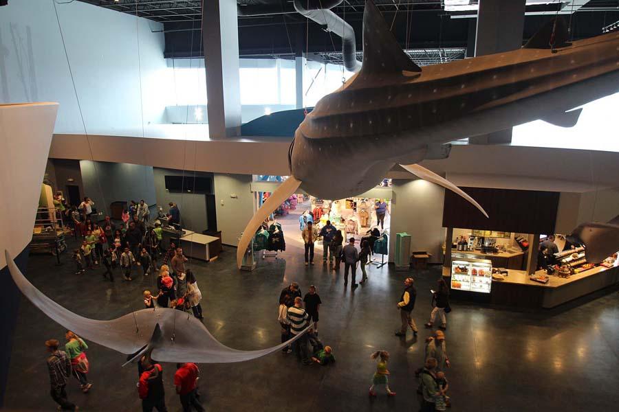 Loveland Living Planet Aquarium Gerken Retail Design